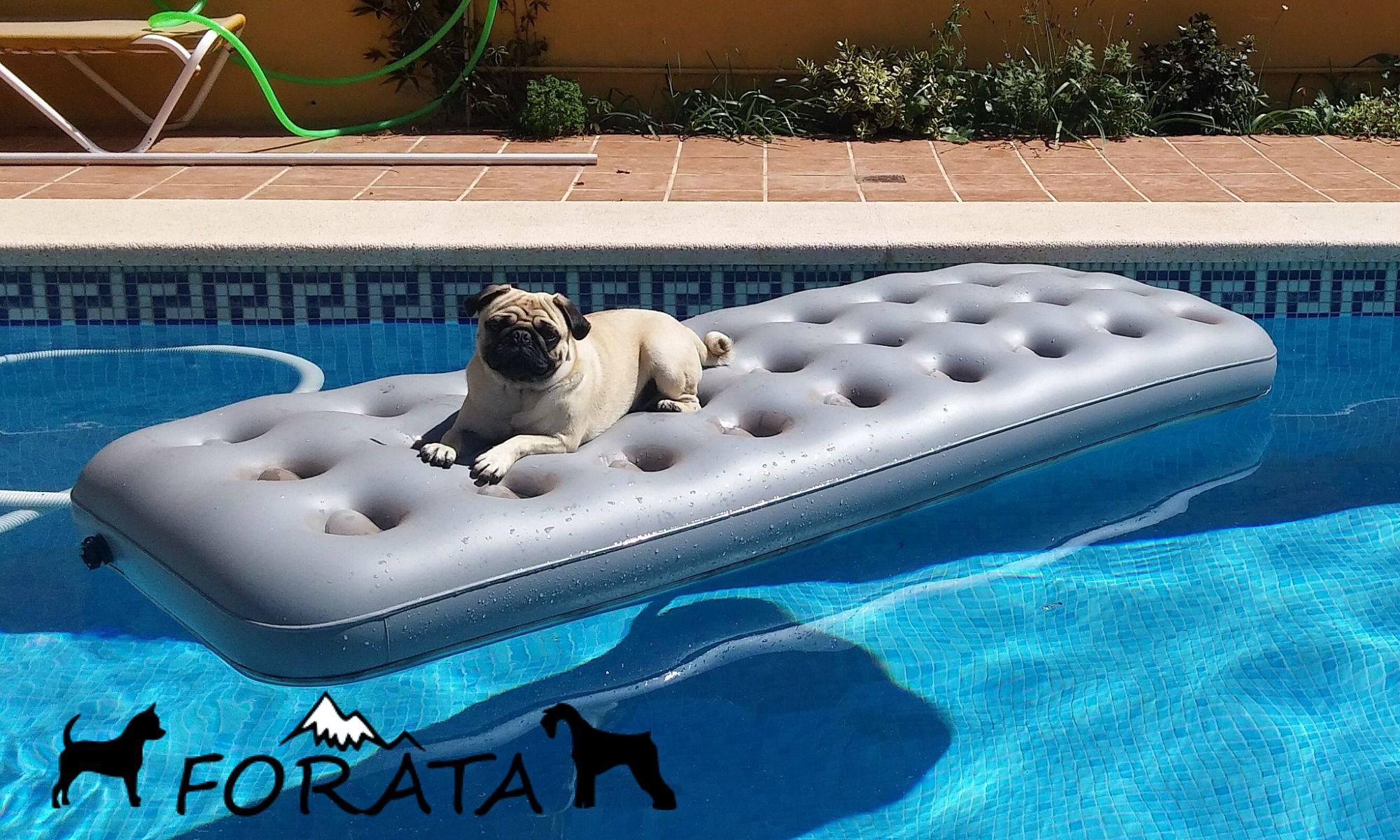 ¡Perro al agua! – Precauciones para el verano