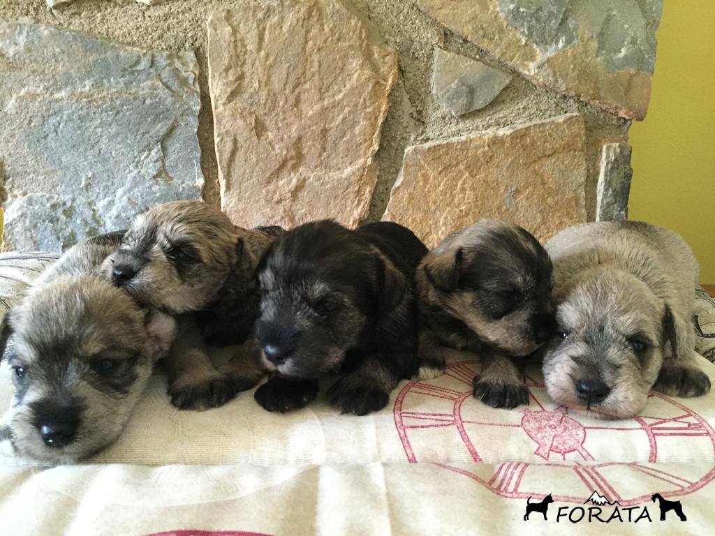 Los cachorros ya tienen 3 semanas.