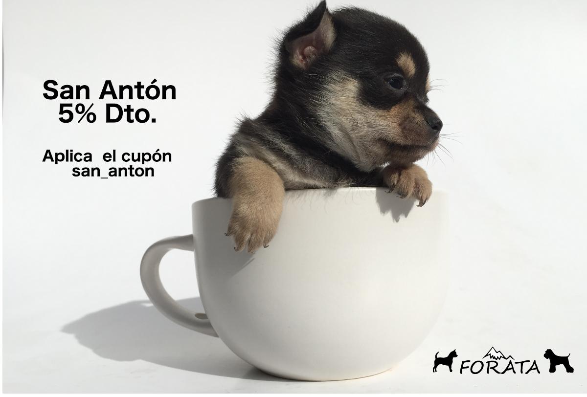 San Antón, patrón de los animales.