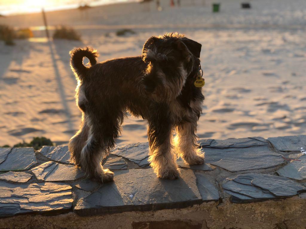 El primer verano en la playa de Maya